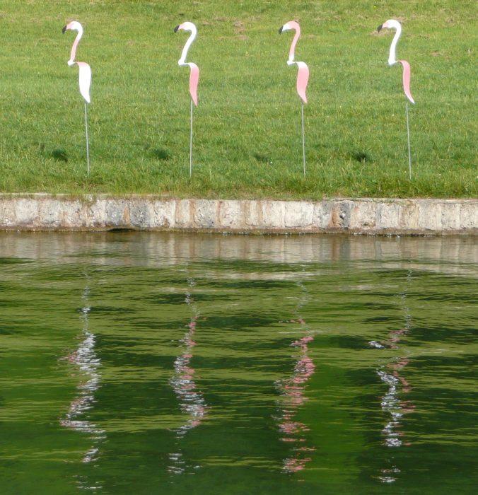 Flamants roses auprès du bassin