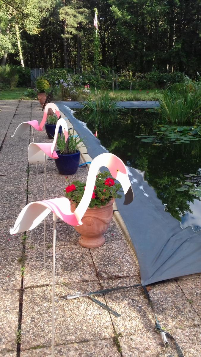 Trio de flamants roses près du bassin