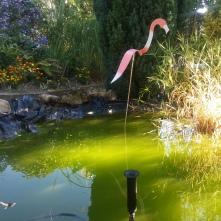 Flamant bassin 1
