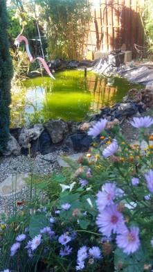 Flamant bassin